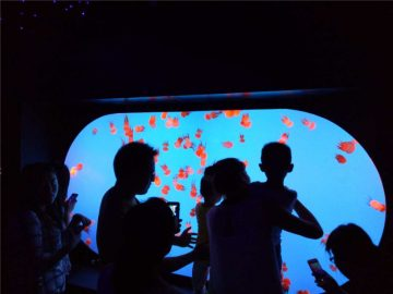 Amrywiaeth wahanol siâp maint gwahanol Jellyfish Tank